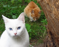 White Cat With Friend