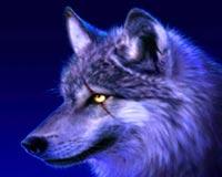 güzel kurt 4