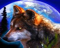 güzel kurt 3