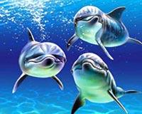 trio dolphin 01