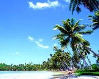 beach tree 01
