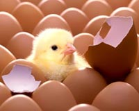 the egg and chick