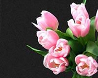 beauty flower 1