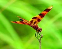 charming flying insects
