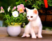 white cat with vase