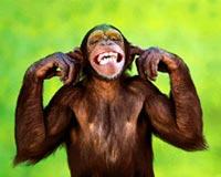 madman macaque