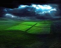 Windows Logo in Grass