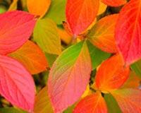 Autumn Leaves v10