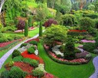 Garden v8