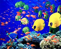 Coral Reef 05