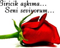 turkish rose 2