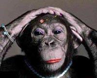 funny female monkey