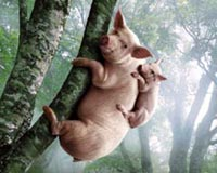 two pig on tree