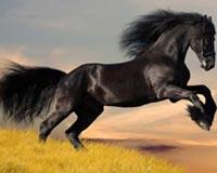 Arabian Horse Rampant