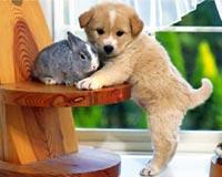 tavşan amp köpek