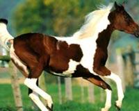 Free Horse Baby