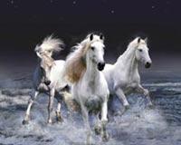 Kuajt Beautiful Bardhë