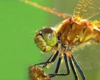 Amazing Macro Insect