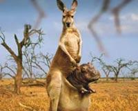 Funny Animal Kingdom