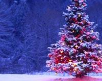 Christmas Lights Tree Xmas