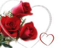 Red Rose Valentine Day