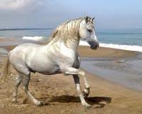 Horse Running At The Beach