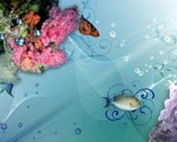 All Flower Fish Butterfly