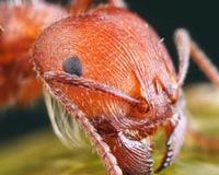 Wild Ant Insect