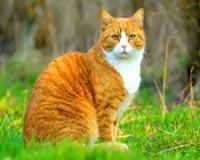 cat scowl