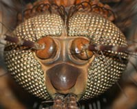 Big Insect Head