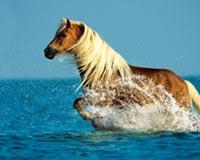 Horse Running Water