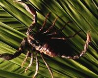 Scorpion 14