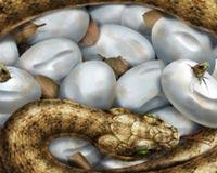 Tehlikeli Yılan Yaprak Yumurta Korku