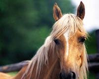 Super Horse 01