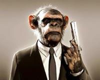 acute monkey