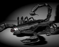 Scorpio In Dark