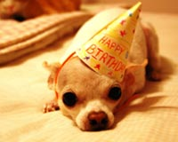 Cute Happy Birthay Dog