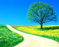 daisy road