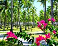 градина красива