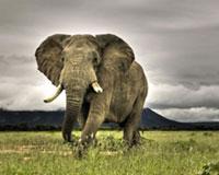 Amazing Elephant