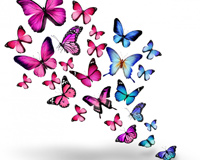Pink Blue Butterflies 3D