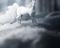 Dream Snow Horse