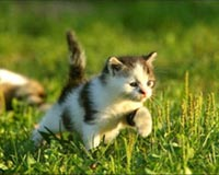 run kitty