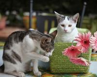 Kittens Flowers