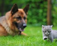 Köpek ile Küçük Kedi
