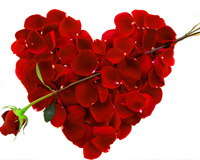 Roses Heart For You