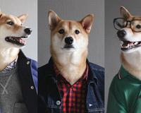 How To Dress Like A Boss Dog